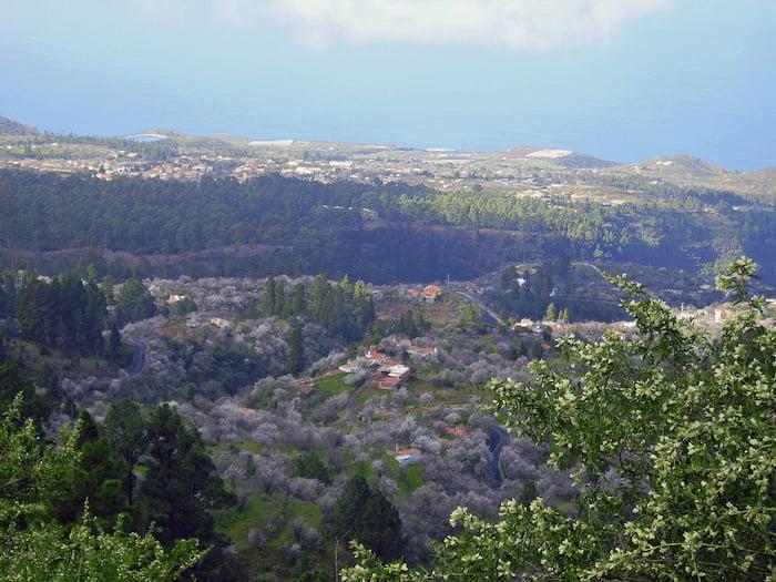 La-Palma-Wandern-Ausblick-vom-Tricias-auf-de-blühende-Landschaft-in-der-Mitte-der-Barranquo-Izcagua
